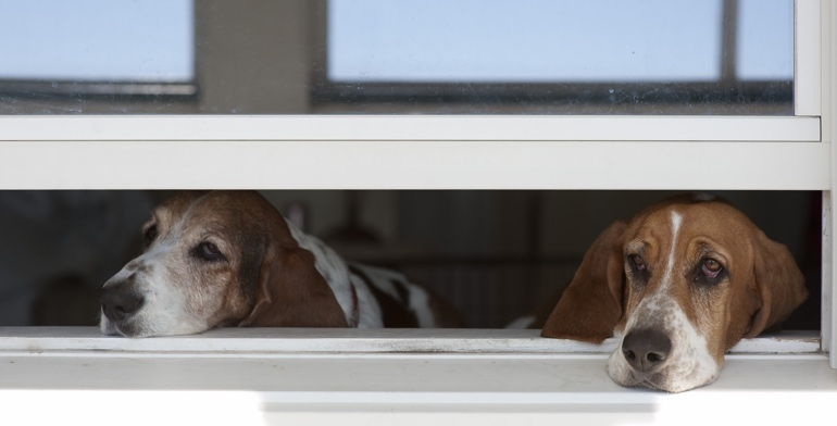 Dogs look out open window without window treatment in Salt Lake City.